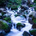 Water Blessing Ceremony 2020 | Photo by Akshay Nanavati on Unsplash | Mount Shasta Bioregional Ecology Center